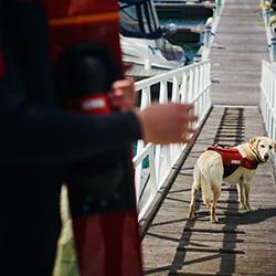 Pet Vest Red JOBE, 240017602, Спасательный жилет для собаки, спасательный жилет для домашних животных, страховочный жилет для собаки